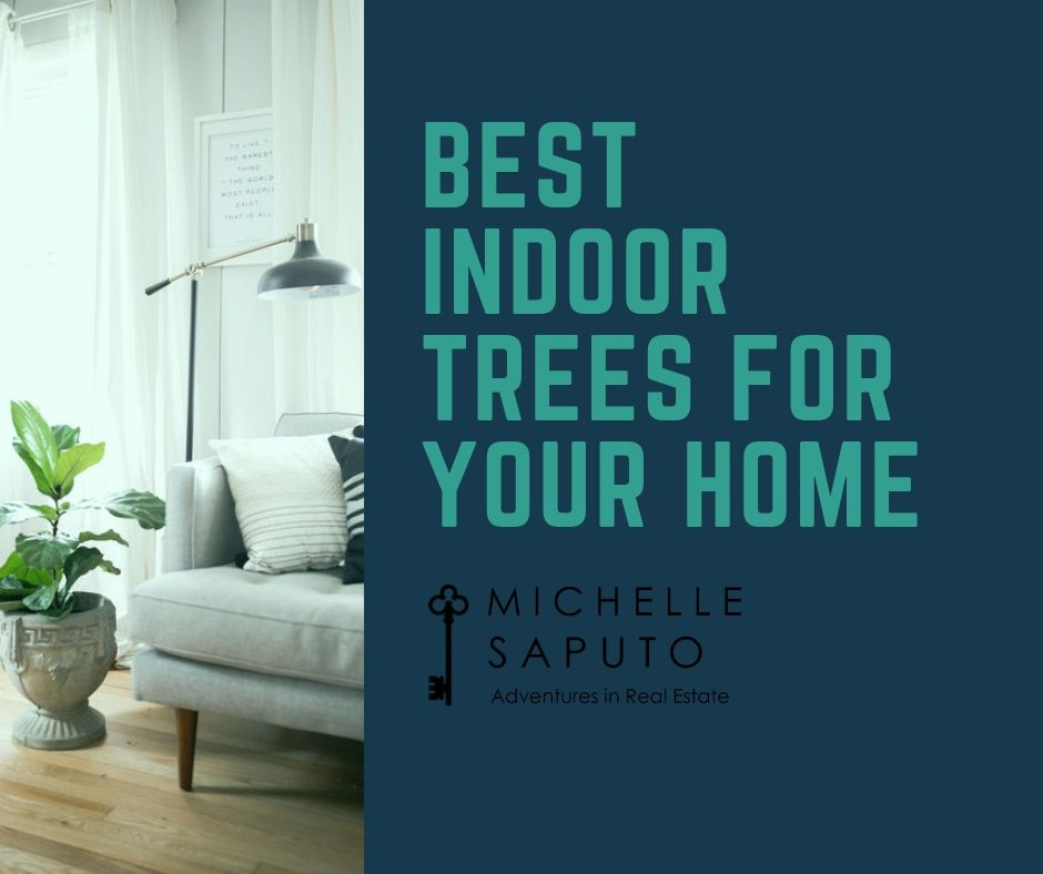 Nothing brings life into a home better than well-maintained greenery. Here are the 6 best indoor plants for your home.